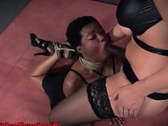 Restrained ebony sub gagging on doms cock